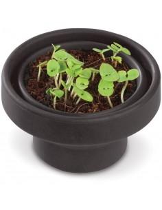 Zestaw doniczka z nasionkiem bazylii