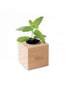 Drewniany pojemnik z ziołami. Nasiona mięty.